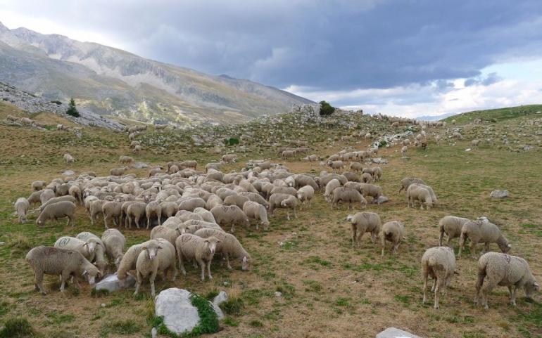 Protection du pastoralisme et biodiversité