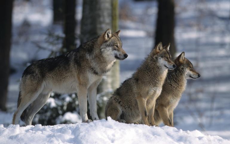 Lettre au Ministre de l'Agriculture, Julien Denormandie : demande d'audience sur le dossier du Loup