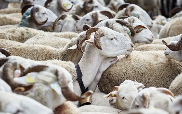 Courrier cosigné par Mme Berthet en soutien à la filière française de la laine